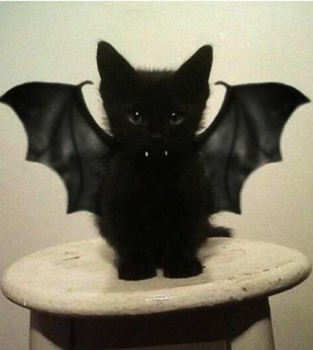 Vampire Bar Kitten