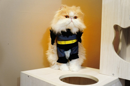 Cat in Batman Costume