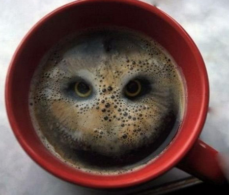 Two Hula Hoops in Coffee makes an Owl