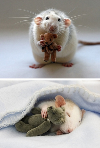 Mouse hugs a teddy