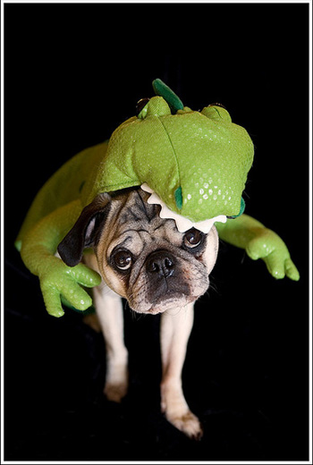 Pug Eaten by Dinosaur Dog Costume