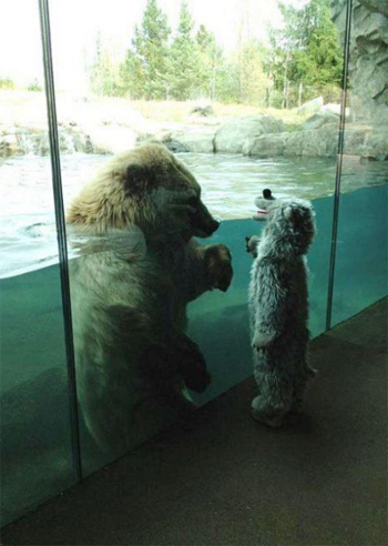 Bear Meets Kid in Bear Costume