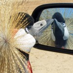 There's a bird in your wing mirror