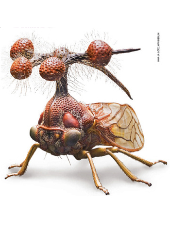 The Brazilian Treehopper is well weird yo