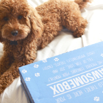 Pawsome news for pet lovers! The subscription box service for pets